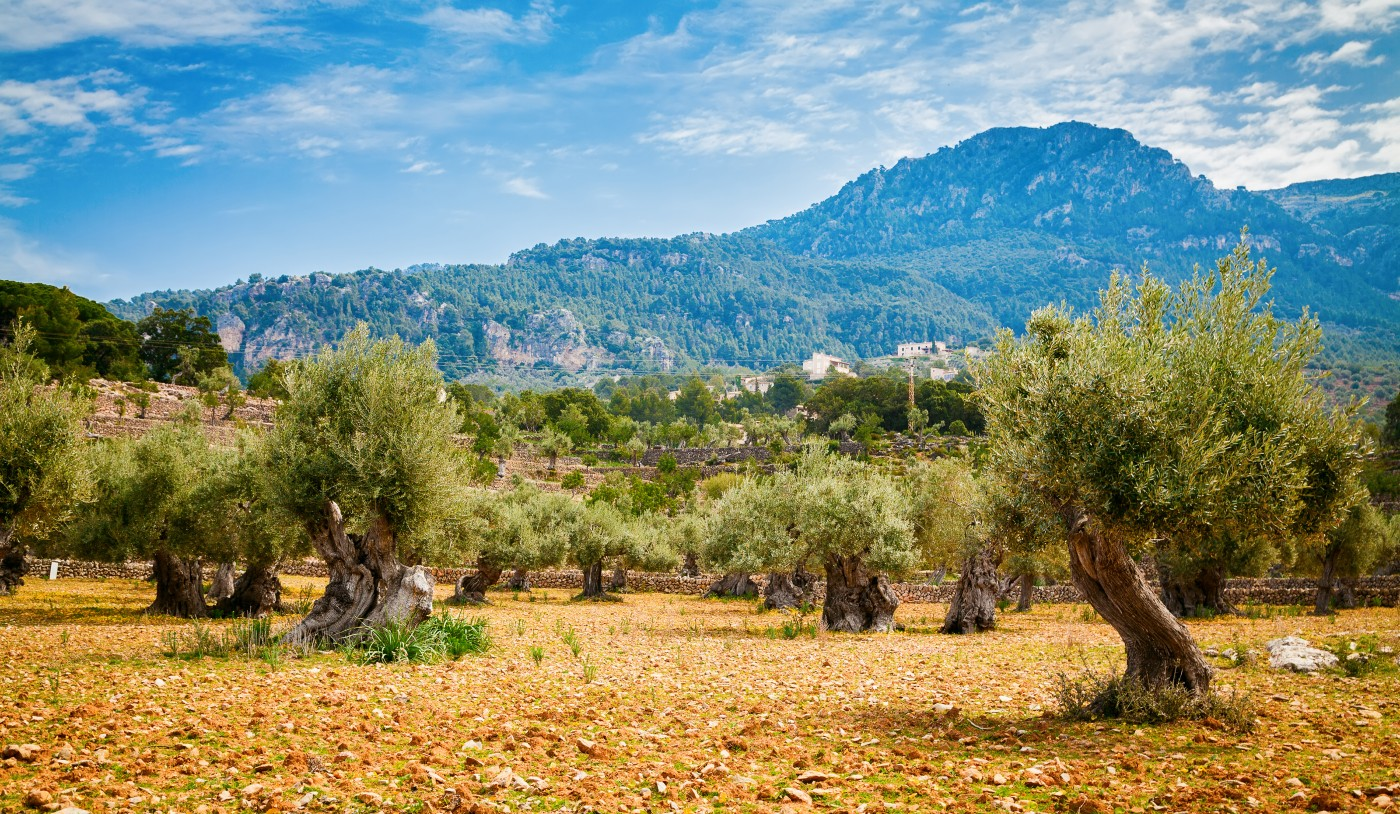 Requirements for the construction of houses on rustic land in Mallorca